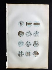 Buffon C1855 Hand Col Print. Study of Cells 11